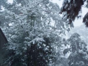 snow1resizeopt