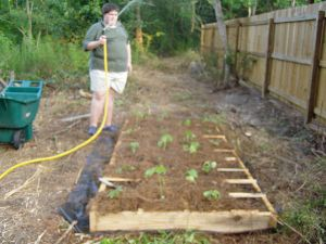 Square Foot Garden planted & mulched