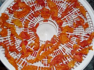 Dried Tomato Skins in the Ronco Dehydrator