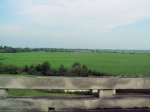 Sugar Cane field from a distance