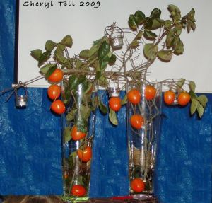 Fresh Persimmon Branches