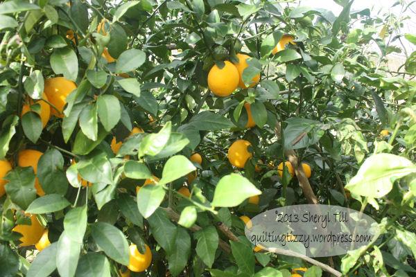 Yummy Meyer Lemons