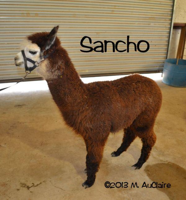 Sancho