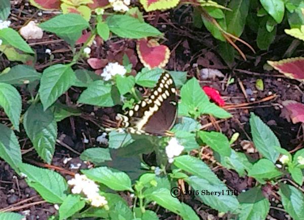 ButterflyResize